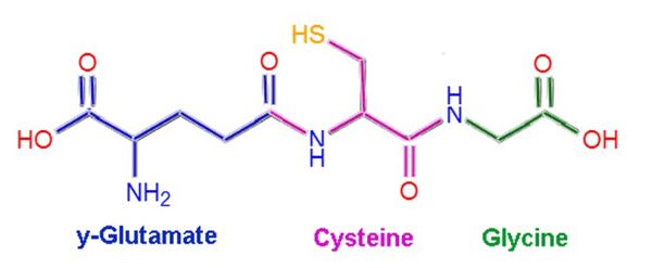 thanh phan cua glutathione